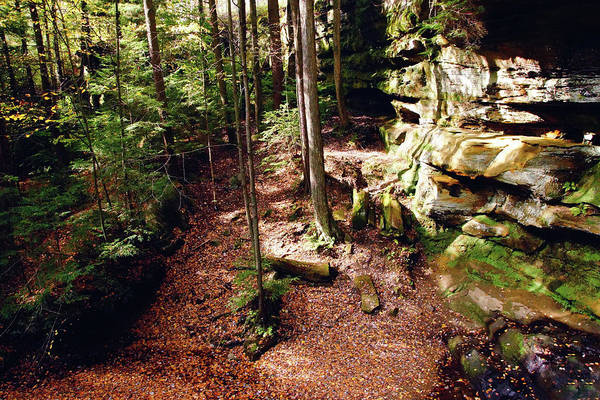 Photograph - The Forest by Mike Murdock