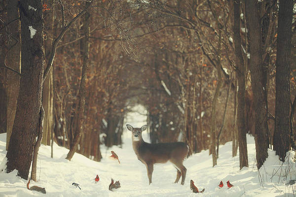 Deer Wall Art - Photograph - The Forest Of Snow White by Carrie Ann Grippo-Pike