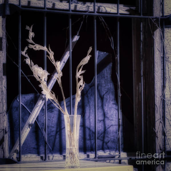 Photograph - Dead Flower Still Life by Charles Hite