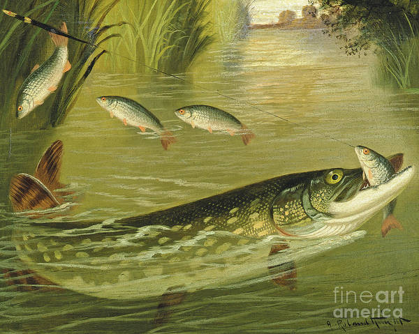 Angling Painting - The Four That Got Away by A Roland Knight