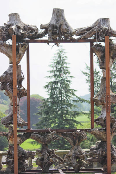 Coniferous Tree Photograph - The Framed Tree by Martin Newman