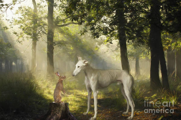 Sighthound Wall Art - Photograph - The Galgo And The Hare by Travis Patenaude