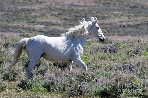Photograph - The Galloping Ghost by Jim Garrison