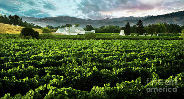Wall Art - Photograph - The Gamble Vineyard by Jon Neidert