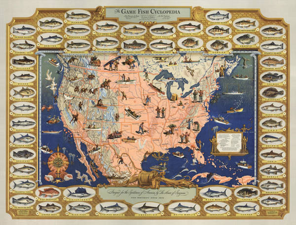 Angling Art Wall Art - Drawing - The Game Fish Cyclopedia -  Game Fish - Angling Chart Of The Usa - Illustrated Game Fishing Chart by Studio Grafiikka