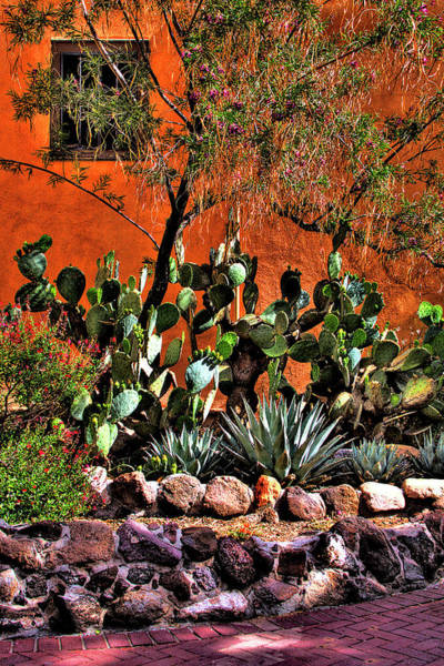 Photograph - The Garden At San Felipe De Neri Church by David Patterson