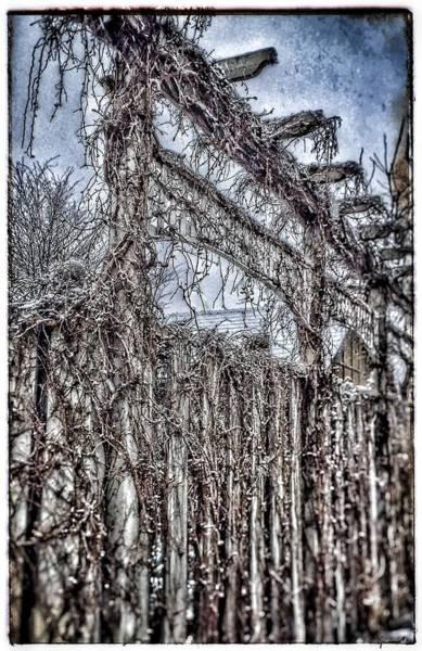 Photograph - The Gate by Christine Paris