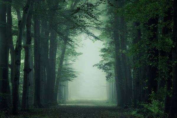 Wall Art - Photograph - The Gate by Martin Podt