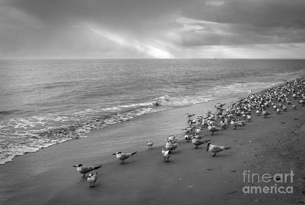 Photograph - The Gathering by Chris Scroggins