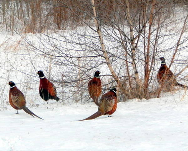 Bird Watcher Photograph - The Gentleman's Club by Karen Cook
