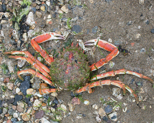 Wall Art - Photograph - The Gigantic Crab by Martin Newman