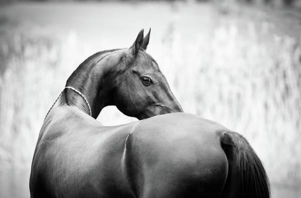 Photograph - The Glance by Ekaterina Druz
