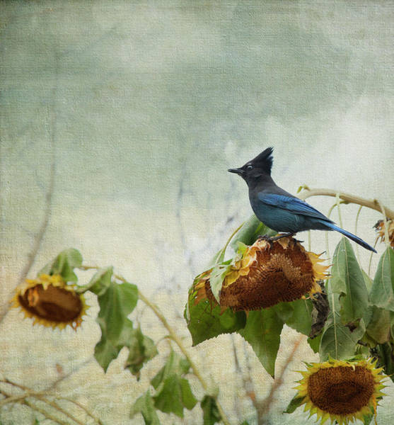 Photograph - The Gleaner by Theresa Tahara