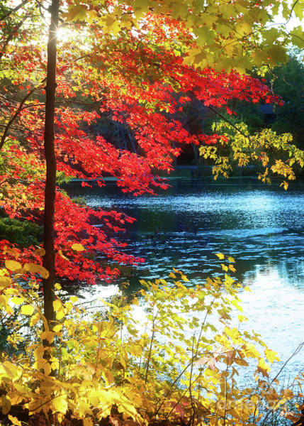 Photograph - The Glory Of A New England Autumn by Anita Pollak