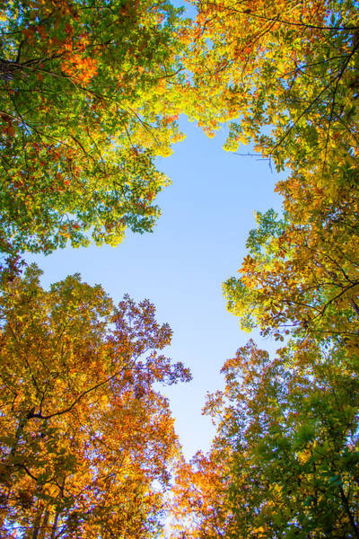 Photograph - The Glory Of Autumn by Parker Cunningham