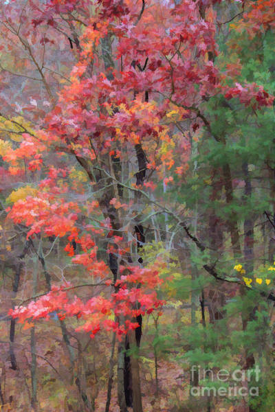 Photograph - The Glory Of Fall by Roberta Byram