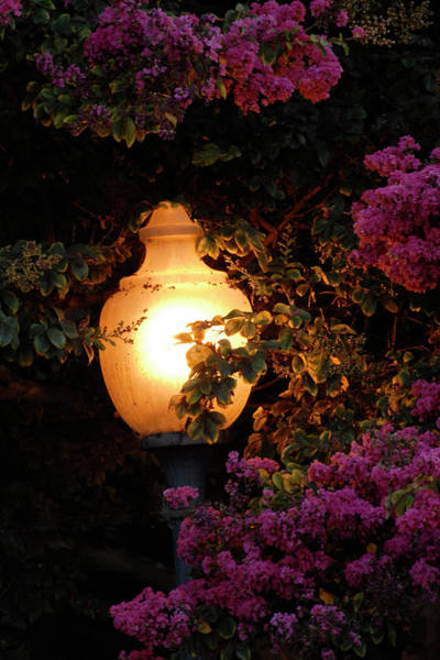 Photograph - The Glow by Howard Bagley