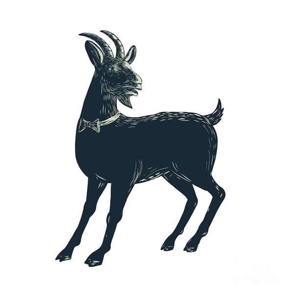 Scratchboard Wall Art - Digital Art - The Goat Wearing Bow Tie Scratchboard  by Aloysius Patrimonio