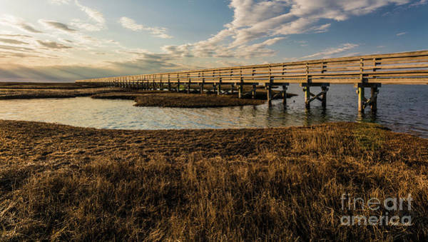 Photograph - The Golden Boardwalk by Michelle Constantine