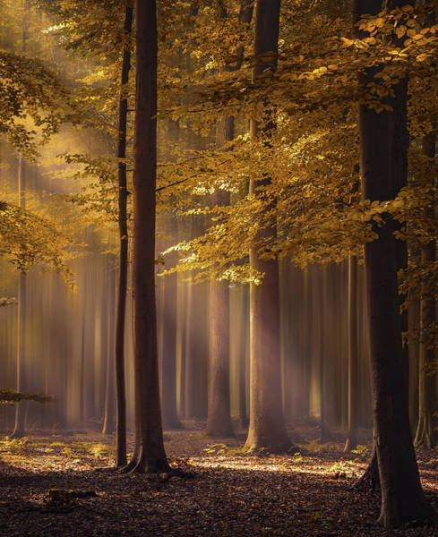 Photograph - The Golden Delight by Rob Visser