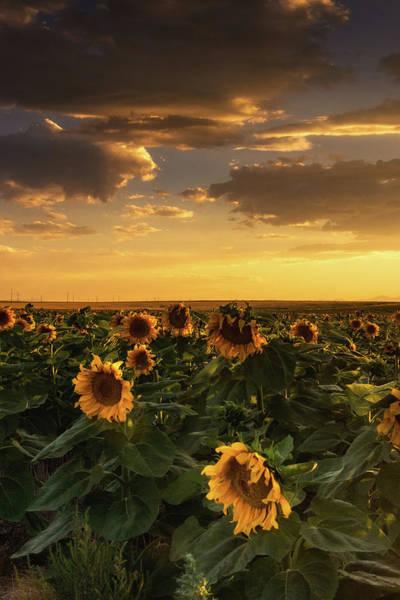 Photograph - The Golden Sky by John De Bord
