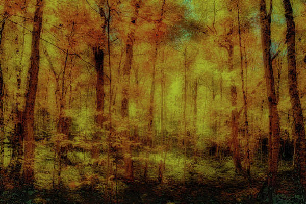Photograph - The Golden Woods by David Patterson