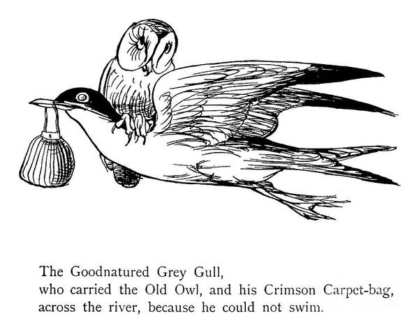 Wall Art - Drawing - The Good Natured Grey Gull by English School