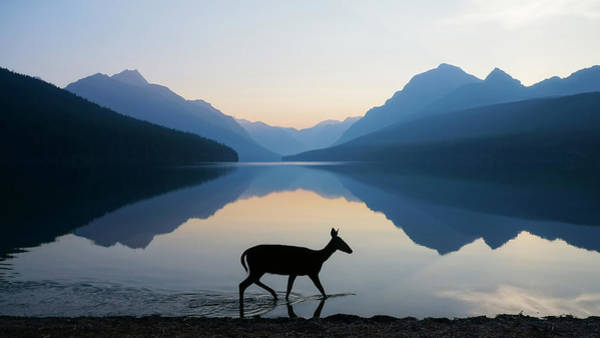 Deer Wall Art - Photograph - The Grace Of Wild Things by Dustin  LeFevre
