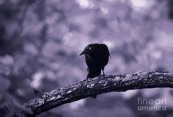 Wall Art - Photograph - The Grackle by Darren Fisher