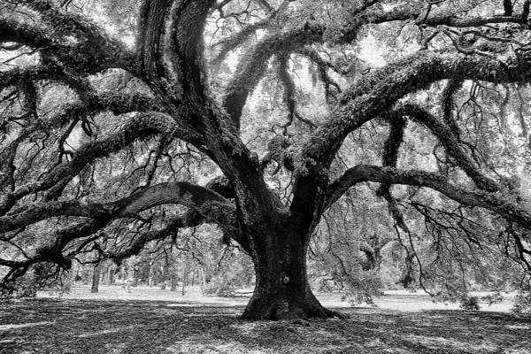 Lee Filters Wall Art - Photograph - The Grand Oak by David Lee Thompson