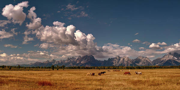 Digital Art - The Grand Tetons National Park Horses Olena Art Photography   by OLena Art - Lena Owens