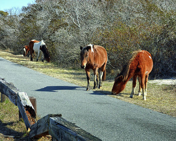 Photograph - The Grass Is Always Greener by Assateague Pony Photography
