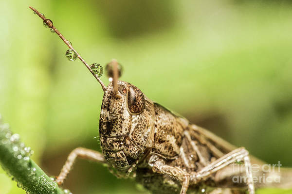 Photograph - The Grasshopper Portrait by Odon Czintos