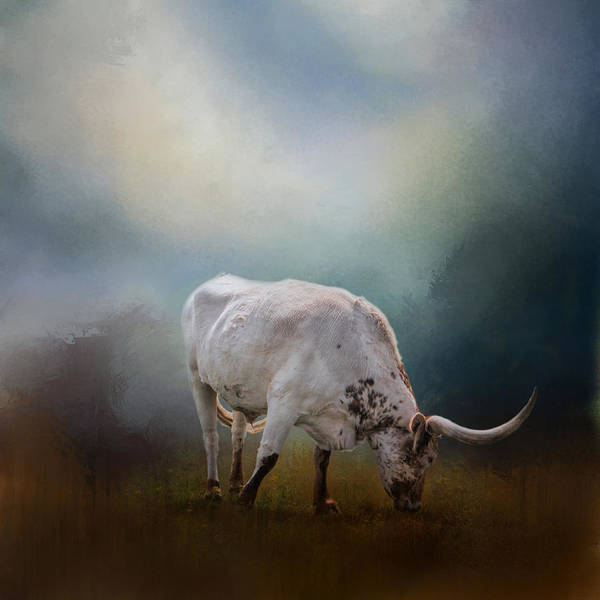 Steer Photograph - The Grazing Texas Longhorn by David and Carol Kelly