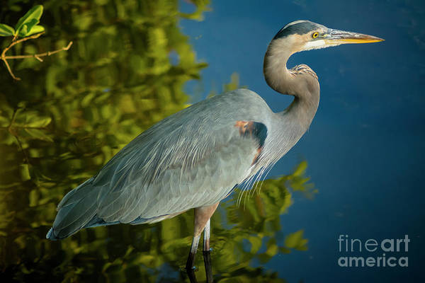 Wall Art - Photograph - The Great Blue by Quinn Sedam
