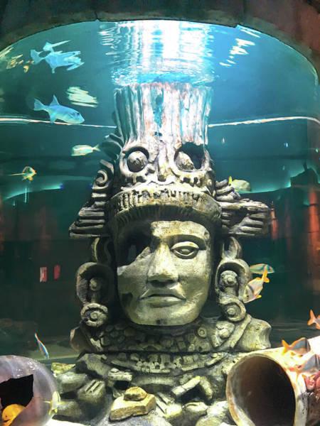 Wall Art - Photograph - The Great Maya Reef At Audubon Aquarium, New Orleans  by Art Spectrum