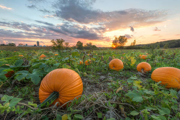 Photograph - The Great Pumpkin by Paul Schultz