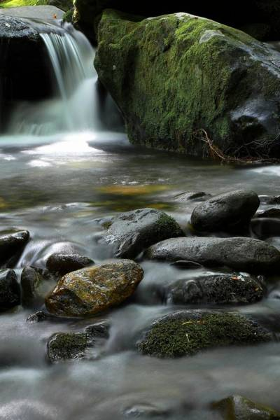 Photograph - The Great Smoky Mountains National Park Mossy Boulders II by Carol Montoya