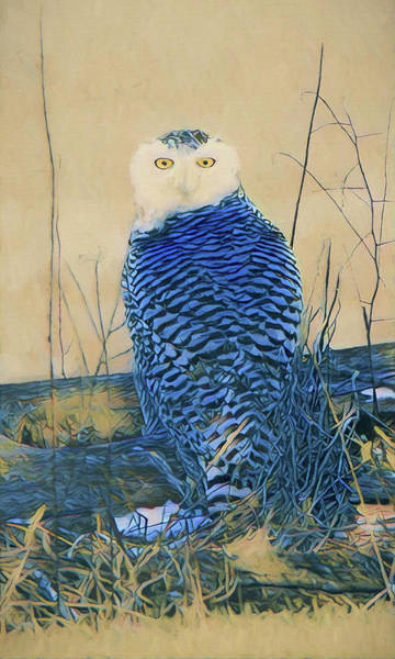 Painting - The Great Snowy Owl by Dan Sproul