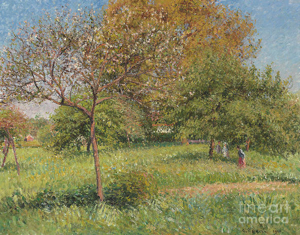 Wall Art - Painting - The Great Walnut Tree, Morning, Eragny by Camille Pissarro