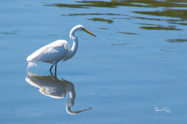 Photograph - The Great White Fisherman by Susan Molnar