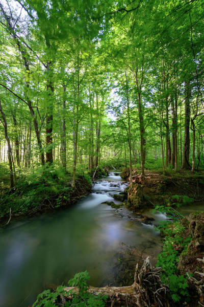 Photograph - The Green Forest by Michael Scott