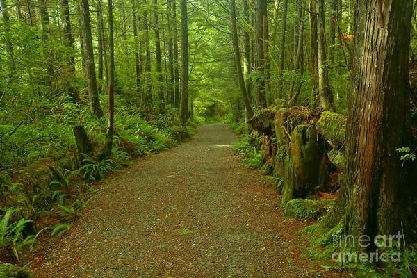 Photograph - The Green Path At Pacific Rim by Adam Jewell