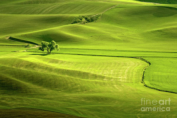 Photograph - The Greens Of Spring by Beve Brown-Clark Photography