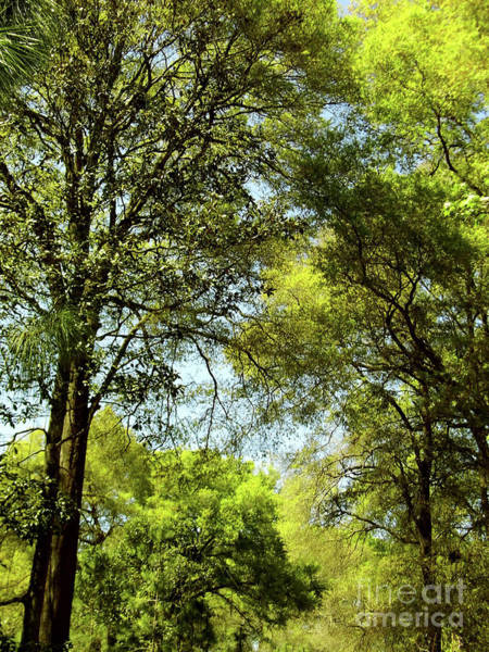 Photograph - The Greens Of Spring by D Hackett