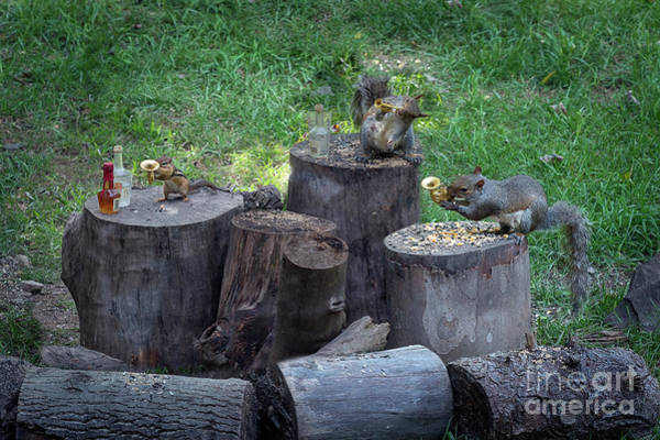 Photograph - The Grey Squirrel Rowdy Tails Band Making Sweet Music by Dan Friend