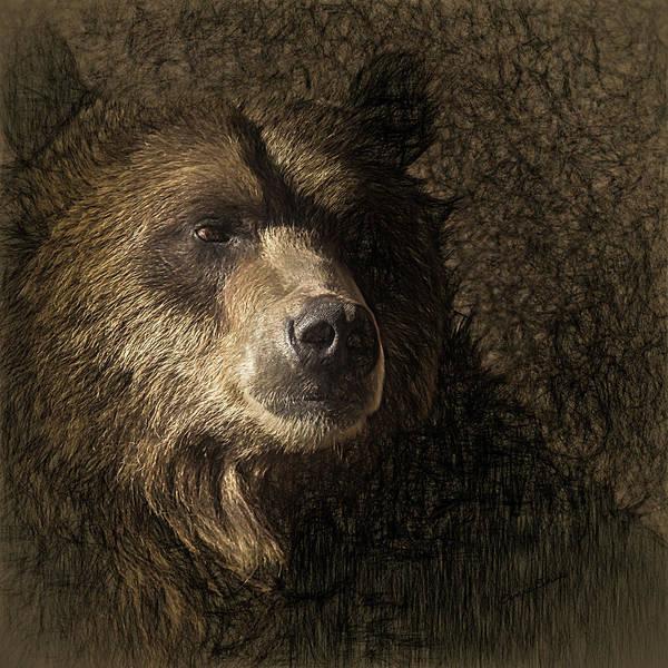 Colorado Wildlife Digital Art - The Grizzly 3 by Ernie Echols
