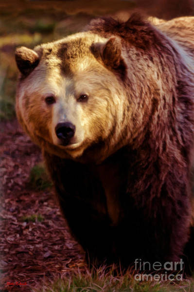 Photograph - The Grizzly Bear Look by Blake Richards