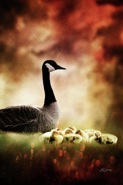 Mother Goose Photograph - The Guardian by Allyson Schwartz