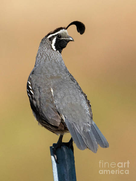 Sentry Wall Art - Photograph - The Guardian by Mike Dawson